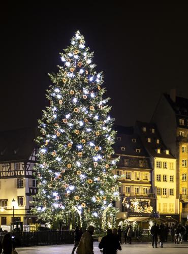Le Grand Sapin - Noël Strasbourg
