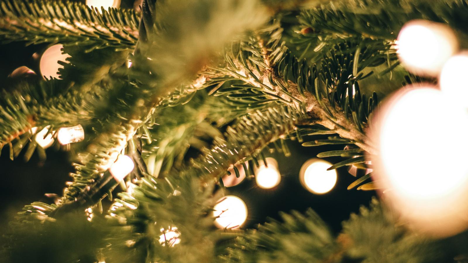 Branche de sapin de Noël